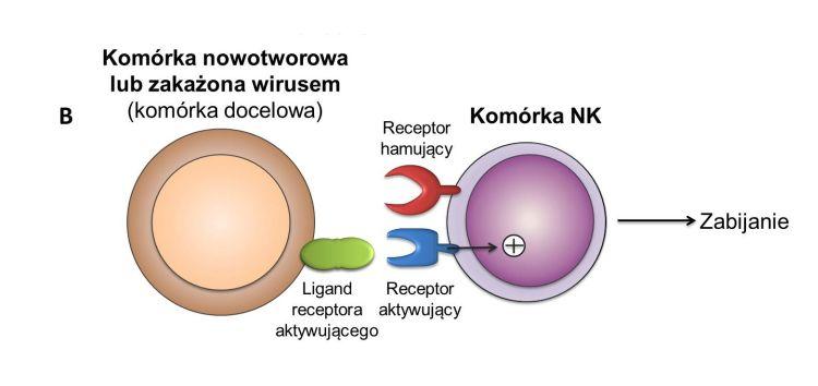 publikacje edukacyjne i naukowe na temat immunoonkologii