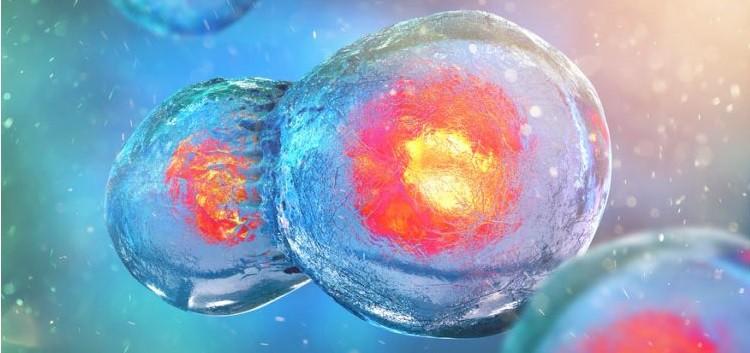 neuroblastoma immunoterapia