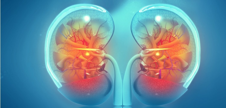 immunoterapia niwolumab rak nerki